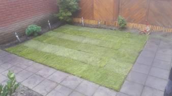 grasveld nieuw