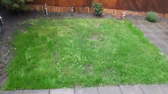 grasveld oud